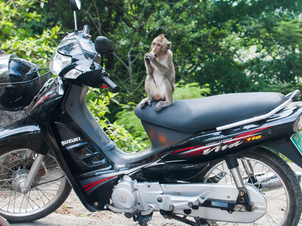 Monkey perched on a scooter