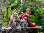 A young monk and three monkeys