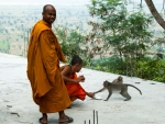 Monks feeding some of the monkeys