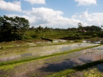 View of the rice paddies from Karsa Café