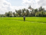 Travis standing inside the rice paddy