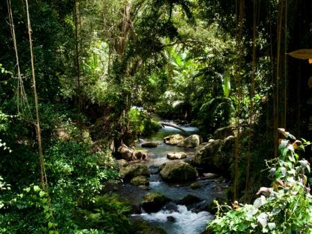 Picturesque foliage surrounding Gunung Kawi