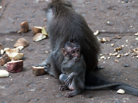 A baby monkey eating