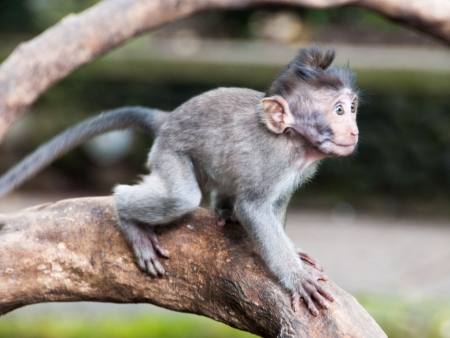 Baby monkey perched on a branch