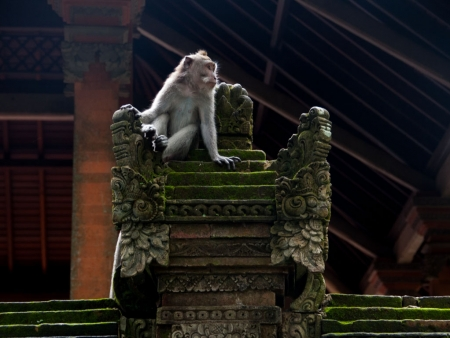 A monkey sitting on a stone throne