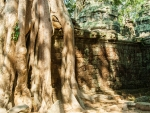 Temple walls with tree roots growing down the side