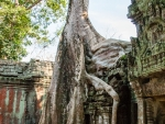 Tree growing out of a temple