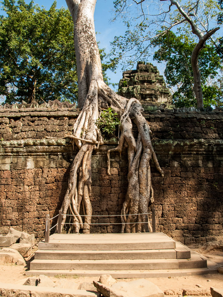 Tree roots embedded into the temple walls