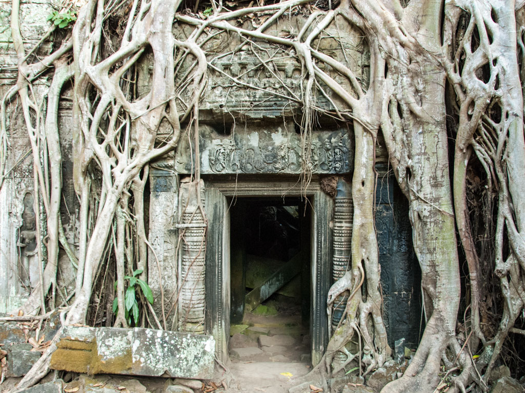 Strangler fig roots draped over a stone entrance