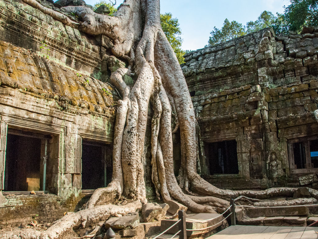 Tree growing from the corner of temple structure