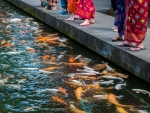 Tourists feeding Koi