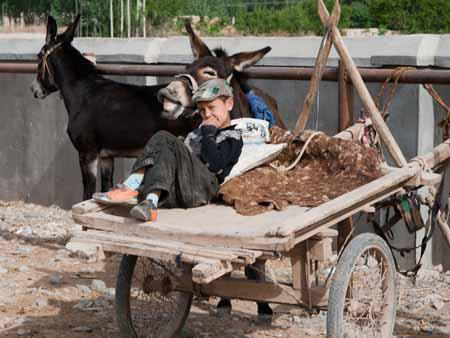 A boy looking after a lively donkey
