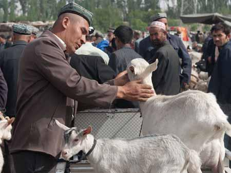 A Uyghur men inspecting a billy goat