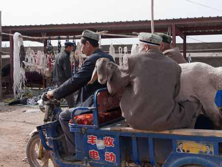 Transporting a goat at the Kashgar livestock market