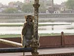 Monkey sitting on scaffolding