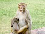 Monkey looking amused