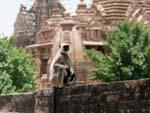 Monkey sitting on temple base with temples visible in the background