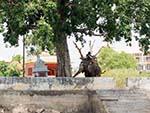 A man and elephant under a tree