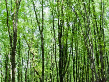 Lush green forest of Nahar Khoran