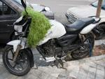 Motorbike with clump of Sabzeh (green sprouts)