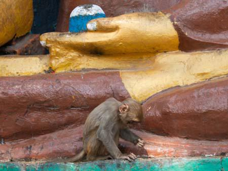 A monkey foraging at the base of a Buddha statue