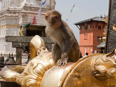 Monkey sitting on the Buddhist Vajra thunderbolt