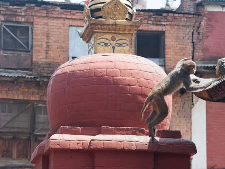 A monkey jumping from a smaller red stupa