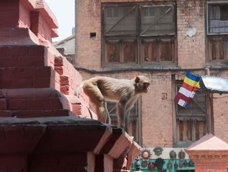 A monkey sitting at the base of a stupa watching below
