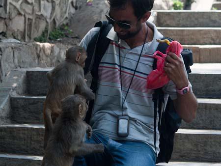Travis feeding some eager monkeys bits of banana