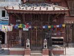 Hindu temple found inside the Shigha Bihar court