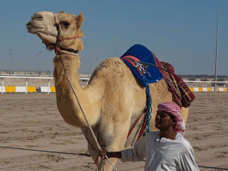 Camel and handler