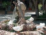 Ducks at UAE Heritage Village